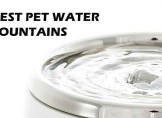 Best Pet Fountains