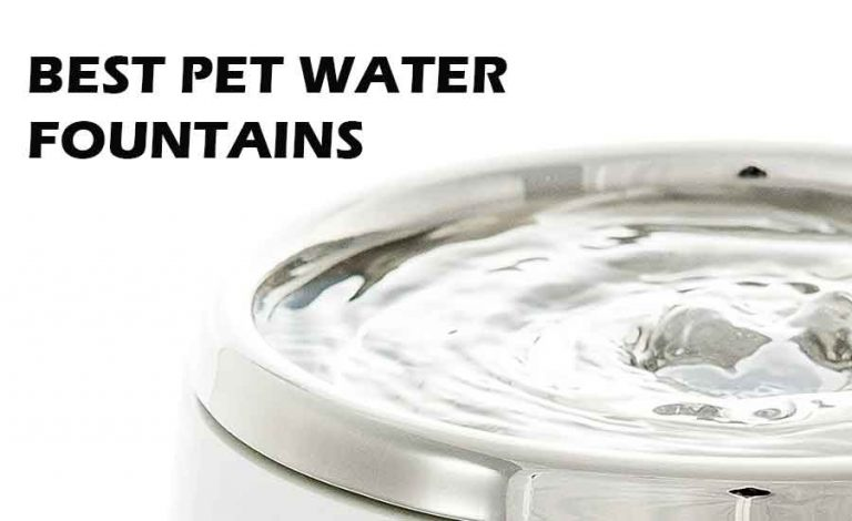 Best Pet Water Fountain Review – 2020 Buying Guide